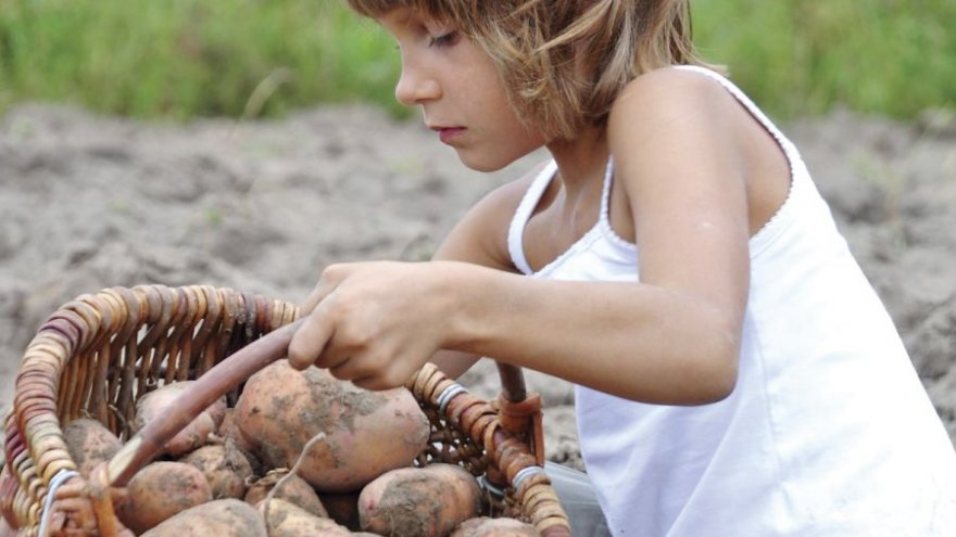 kartulid